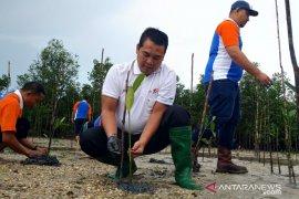IPC Pangkalbalam tanam 3.000 batang mangrove di Pantai Baskara