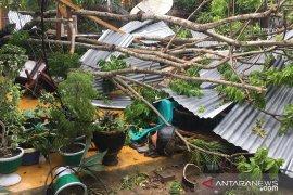 Pohon tumbang menimpa rumah warga di Gorontalo