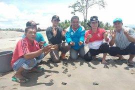 DKP lepasliarkan ratusan tukik di perairan Abdya