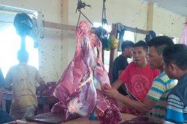 Dinas Pertanian Malut berupaya tingkatkan produksi sapi