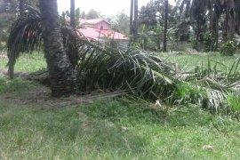 Jatuh dari pohon kelapa seorang warga meninggal ditempat