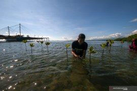 Tanam Mangrove Peringati Hari Bumi Page 1 Small