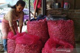 Harga bawang putih di Ambon naik