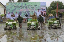 Aceh surplus gabah 1,3 juta ton