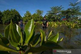 Tanam mangrove peringati Hari Bumi Page 2 Small
