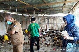 Polbangtan kawal distribusi ayam buras kepada 5 kelompok santri Ponpes Deliserdang