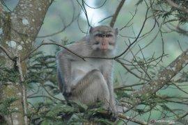 Diserang monyet, Elis bocah di Bogor jalani perawatan intensif