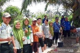Polbangtan Medan budidaya bawang merah di Batangkuis