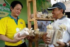 Produsen es krim dukung program budi daya jamur tiram di Ngawi