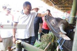 HUT ke-248, Kota Gianyar lombakan Sapi Ternak Bali