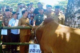 Tingkatkan produksi daging, Nagan Raya gelar expo ternak