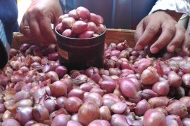 Harga bawang merah di Putussibau mencapai Rp40 ribu/kg