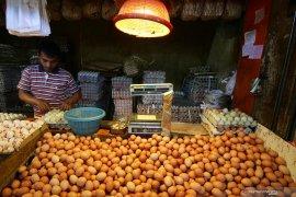 Disperindag jamin harga telur ayam di Ternate kembali normal