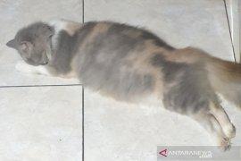 Bunuh kucing di pengering mesin cuci, pria Malaysia dibui 34 bulan