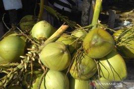 Kelapa muda banyak diminati warga Aceh barat sebagai menu berbuka