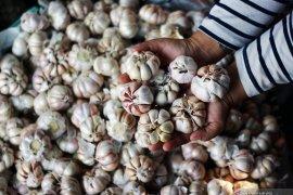 Harga bawang putih di berbagai daerah segera stabil
