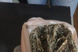 Polisi Binjai ringkus pemilik 1.600 gram ganja