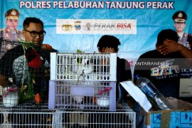 Polisi Surabaya ungkap penyelundupan ratusan satwa dilindungi