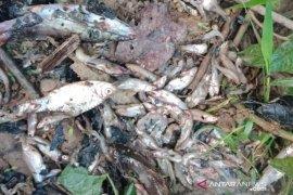Dinas Kesehatan Nagan Raya larang warga konsumsi ikan tercemar limbah
