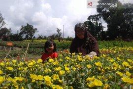 """Rejang Lebong siapkan agenda """"festival garden flower"""""""