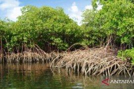 Pemkab Kubu Raya bangun potensi wisata berbasis mangrove