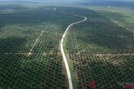 Netherlands expected to tackle discrimination against RI's palm oil