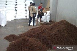 Petani cengkih di Ambon mengeluh harga  turun