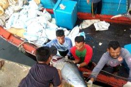 Aceh ekspor enam ton ikan segar lewat laut ke  Thailand