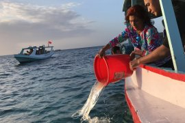 Menteri KP Susi Pudjiastuti lepas liarkan 37.000 benih lobster