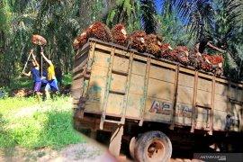 Rusia naikkan tarif pajak CPO Indonesia 20 persen