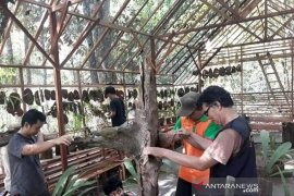 KPH Tabalong builds an orchid conservation house
