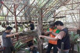 KPH Tabalong bentuk rumah konservasi Anggrek