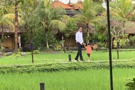Kunjungan kerja Jokowi diselingi momong Jan Ethes di Bali