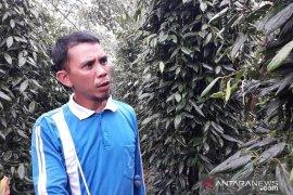 Harga lada di Kabupaten Bangka Tengah naik