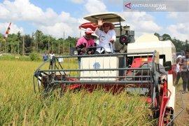 Lapsus : Agrobisnis jalan Kotabaru Menuju Swasembada Pangan