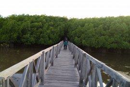 Menitip harapan di hutan mangrove Tongke-Tongke