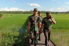 Kodim supports swamp land optimizing in Tabalong