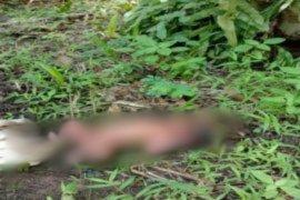 Karyawan perkebunan temukan bayi perempuan di bawah pohon sawit