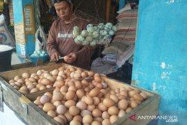 Harga telur ayam ras di Piru kembali turun