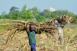 APTRI desak pemerintah benahi industri gula