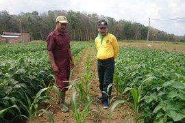 Tim BPTP Jambi lakukan monitoring budidaya jagung di Merangin