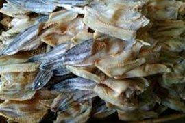 Ikan Gabus Kumpeh banyak dijual ke Palembang