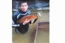 Kapuas Hulu siap gelar lomba ikan arwana super red