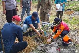 Singkawang budi dayakan padi bebas residu pestisida
