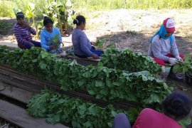 Warga Kawasi nikmati program pertanian dari Harita Nickel