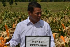 Menteri pertanian copot pejabat terlibat kasus suap impor bawang putih