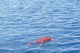 Satu korban kapal tenggelam ditemukan