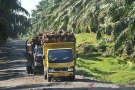 Harga minyak sawit  periode 13-19 September di Jambi turun