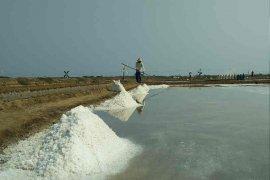 Garam petani Cirebon hanya Rp300 per kilogram