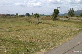 Harga gabah di Aceh turun Jadi Rp4.773/Kg